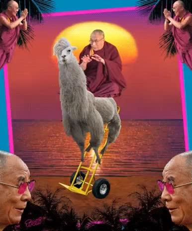 Watch this llama GIF on Gfycat. Discover more Candy, LOL GIF, Trolli, candy, dalai lama, dalai láma, dolly, dolly llama, llama, llama drama, llamas, lmfao gif, lol gif, pun, random, sour brite crawlers, trolli, weird, weirdlyawesome GIFs on Gfycat
