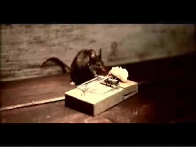 Watch mousetrap GIF on Gfycat. Discover more related GIFs on Gfycat