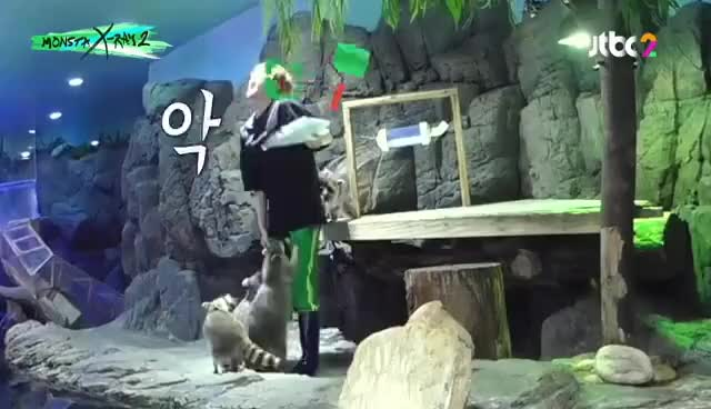 Watch IM CHANGKYUN THE LITTLE SHIT GIF on Gfycat. Discover more related GIFs on Gfycat