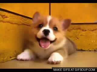 Watch and share Puppies Du GIFs on Gfycat