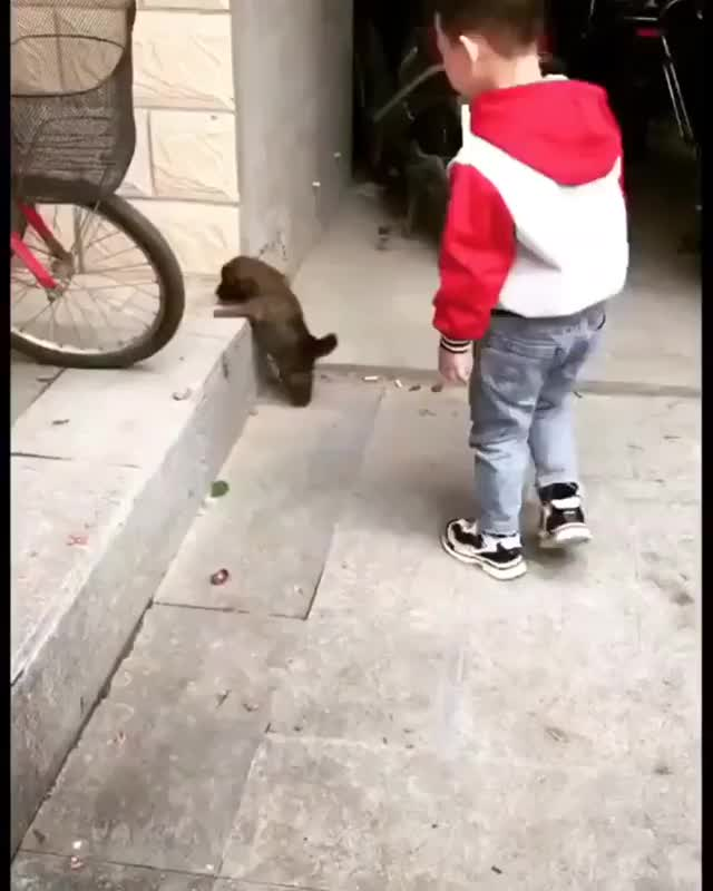 Watch and share Puppy GIFs and Help GIFs by tp0604 on Gfycat