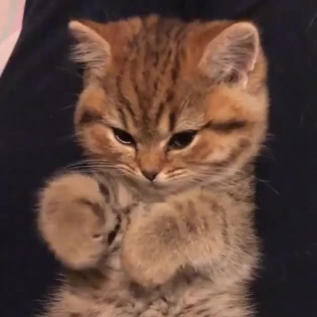 Watch and share Kittens GIFs and Kitten GIFs by Koleandra on Gfycat