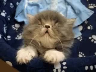 Watch sleeping cat GIF on Gfycat. Discover more related GIFs on Gfycat