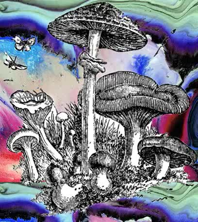 Watch and share Magic Mushrooms Gif GIFs and Psychedelic Gif GIFs on Gfycat