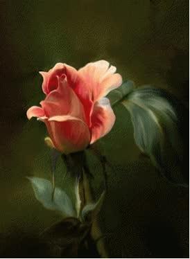 Watch Deixe eu plantar flores em seu coração. GIF on Gfycat. Discover more related GIFs on Gfycat