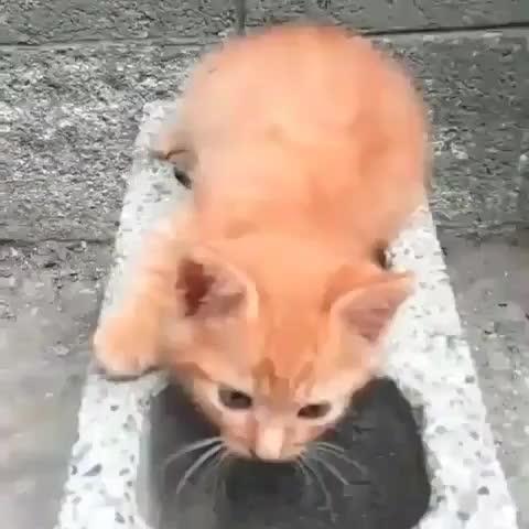 CatGifs, Thisismylifemeow, thisismylifenow, Cat brick GIFs