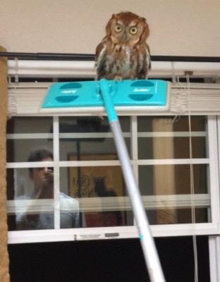 dontflinch, tarantinogifs, unexpectedjihad, The Owl Whisperer GIFs