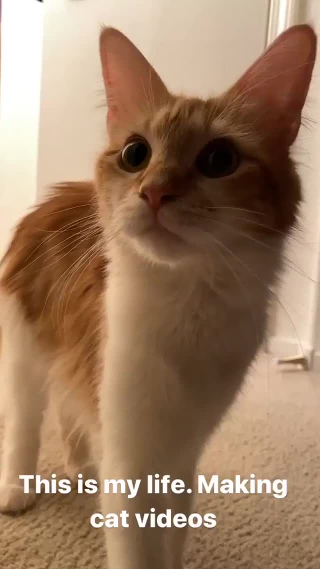 Watch and share Ziennasonne - 2019-10-08 12:56:24:296 GIFs by Charles Carmichael on Gfycat