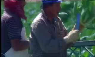 Watch and share Farmworkers GIFs and Health Care GIFs on Gfycat