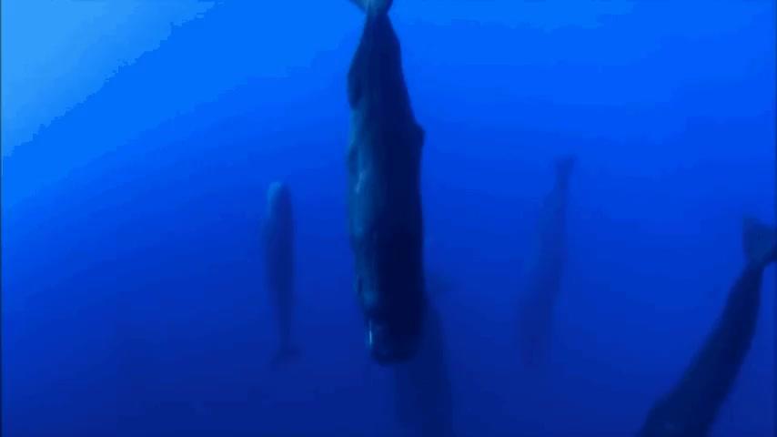 Sleeping Whales GIFs