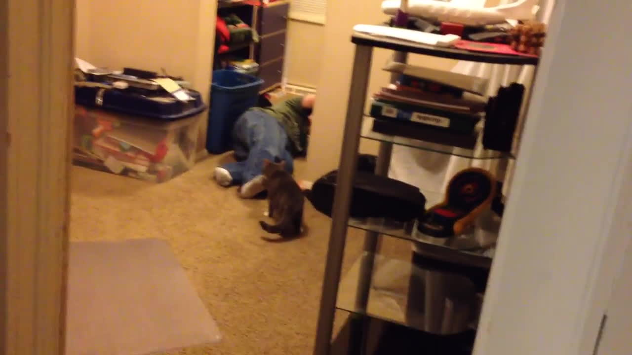 CatsMurderingToddlers, boy (quotation subject), cat (animal), Cat Slaps Boy GIFs