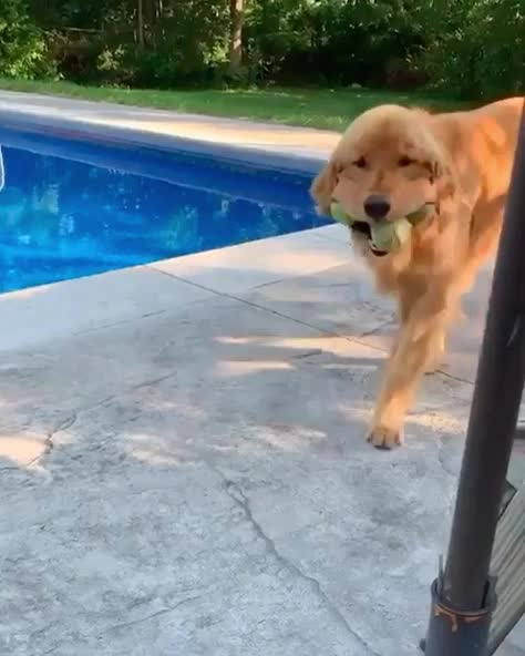 Watch and share Tennis GIFs and Dog GIFs by I Am The GIF(t) on Gfycat
