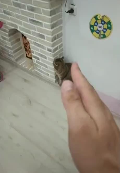 Master catto - gif
