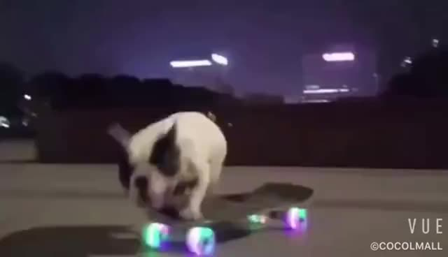 Dog, skateboarding, Love Skateboarding dog GIFs