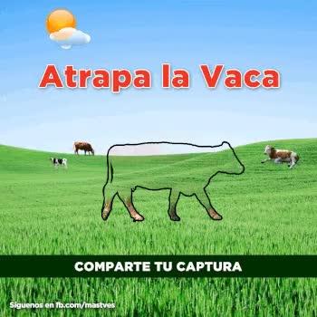 Watch and share Atrapa La Vaca GIFs on Gfycat