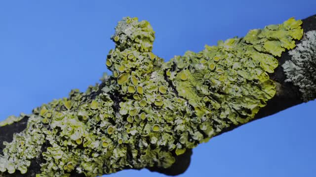 Watch and share Lichens Time Lapse GIFs on Gfycat
