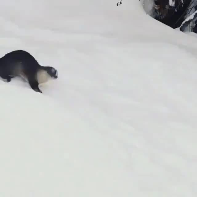 Otters 🐾 (@OnlyOtters) - Twitter 2 GIFs