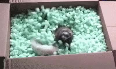 Watch The popular Peanut Ferret GIF on Gfycat. Discover more related GIFs on Gfycat