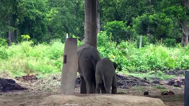 Watch and share Cutest Baby Elephant Running To Its Mom After Sensing Danger GIFs on Gfycat