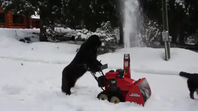 Watch and share Doggo Snowblower In Canada GIFs on Gfycat