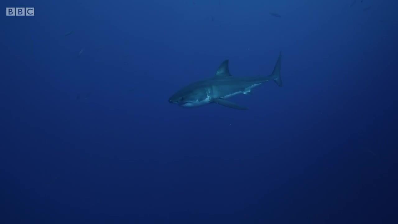 SplitDepthGIFS, sharks, thedepthsbelow, The surface (reddit) GIFs