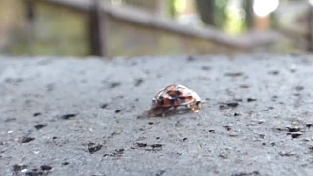 Watch and share Ladybug GIFs and Beetle GIFs by minisuspend on Gfycat