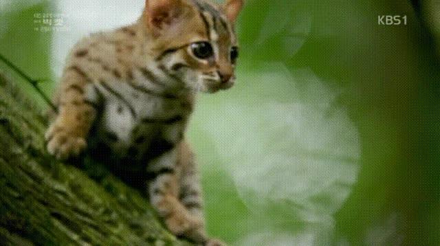 Watch and share 세상에서 가장 작은 고양이 GIFs on Gfycat