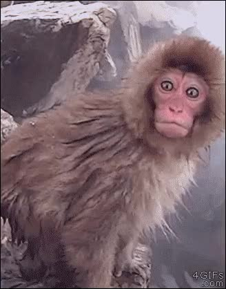 Watch and share Funny Shocked Monkey Reaction GIFs on Gfycat