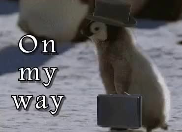 Watch this omw GIF on Gfycat. Discover more omw, on my way, penguin GIFs on Gfycat
