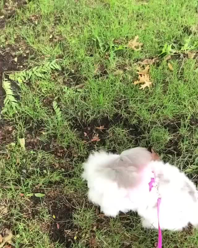 Watch and share Bunnies | Rabbits GIFs and Bunnylovers GIFs on Gfycat