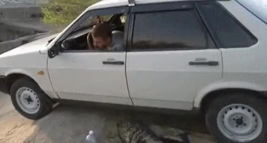 Watch Hold my beer while I reverse out of this tricky spot (reddit) GIF on Gfycat. Discover more ANormalDayInRussia, anormaldayinrussia, holdmybeer GIFs on Gfycat