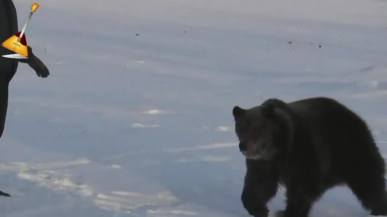 anormaldayinrussia, Медведь Яшка. Это Россия детка... GIFs