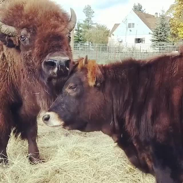 Watch and share Animal Friendship GIFs and Unlikely Friends GIFs by lnfinity on Gfycat