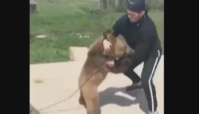 Watch Khabib Nurmagomedov wrestling with a Bear. GIF on Gfycat. Discover more related GIFs on Gfycat