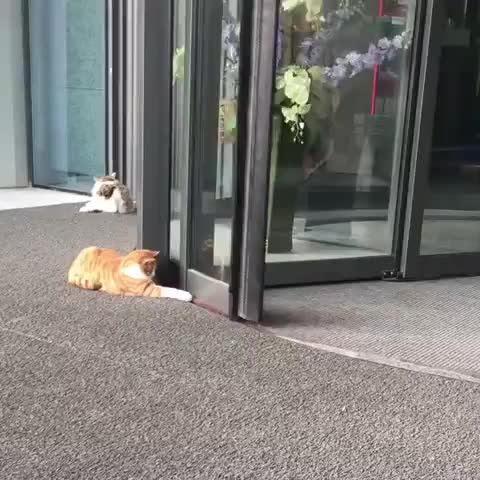 Watch and share Aww GIFs and Cat GIFs by gretta on Gfycat