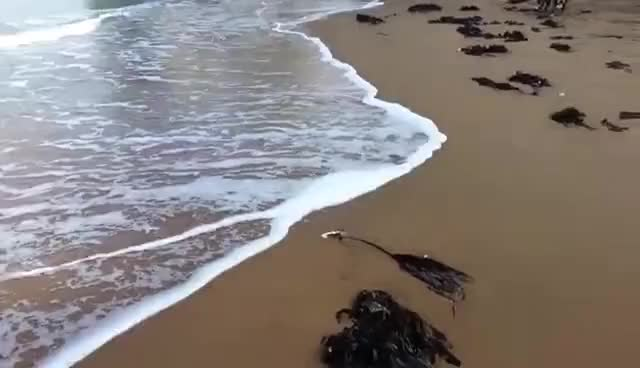 Watch and share Waves GIFs on Gfycat