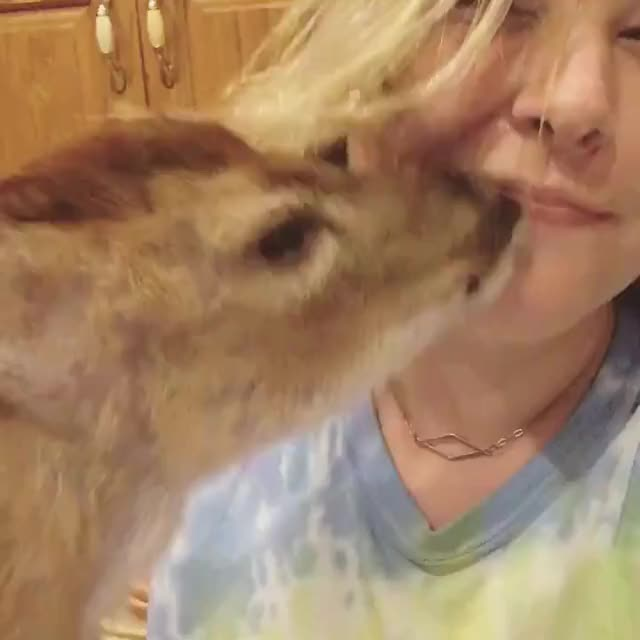 Watch and share Deer GIFs and Dog GIFs by FarSizzle on Gfycat