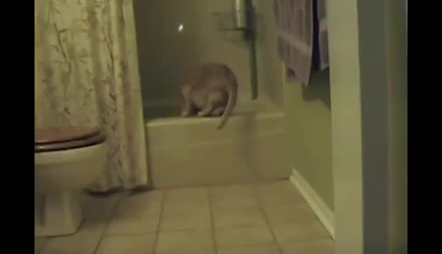 Watch bath GIF on Gfycat. Discover more cat GIFs on Gfycat