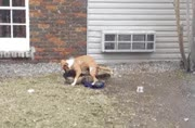 Watch cachorro GIF by Rafael Monari (@rafaelmonari) on Gfycat. Discover more dog, dry hump, too excited GIFs on Gfycat