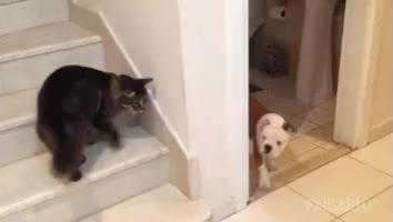 Watch catsareassholes gif GIF on Gfycat. Discover more aww GIFs on Gfycat