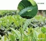 Watch and share 中国大麻出售【qq11877539】weed飞行燃料 GIFs by 哪里能买到大麻?【网址fxy420.com】weed飞行燃料 on Gfycat