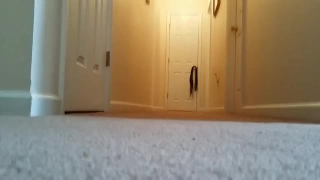 Watch First Fetch GIF by 2thebreezes on Gfycat. Discover more related GIFs on Gfycat