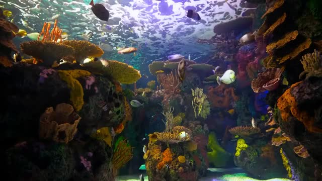 Watch and share The Best 4K Aquarium For Relaxation 🐠 Sleep Relax Meditation Music - 2 Hours - 4K UHD Screensaver GIFs on Gfycat