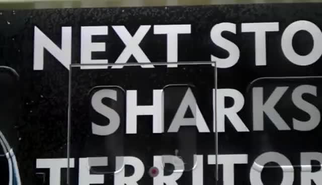 Watch and share San Jose Sharks GIFs on Gfycat