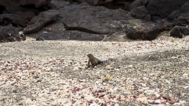 Watch and share Iguana (cut) GIFs by jgtrosh on Gfycat