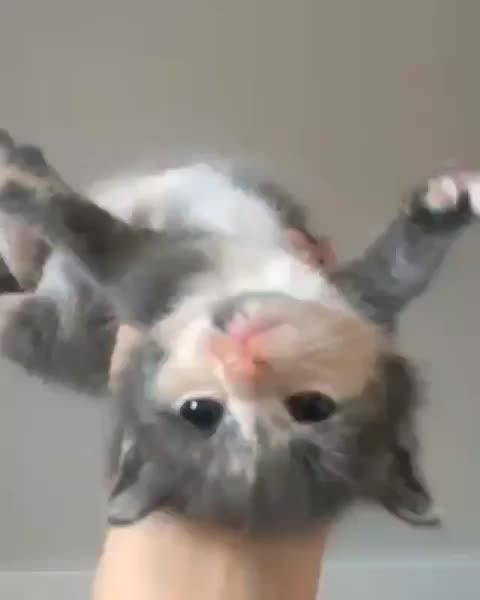 Watch Spider cat GIF by Boojibs (@boojibs) on Gfycat. Discover more aww, kitten, cute GIFs on Gfycat
