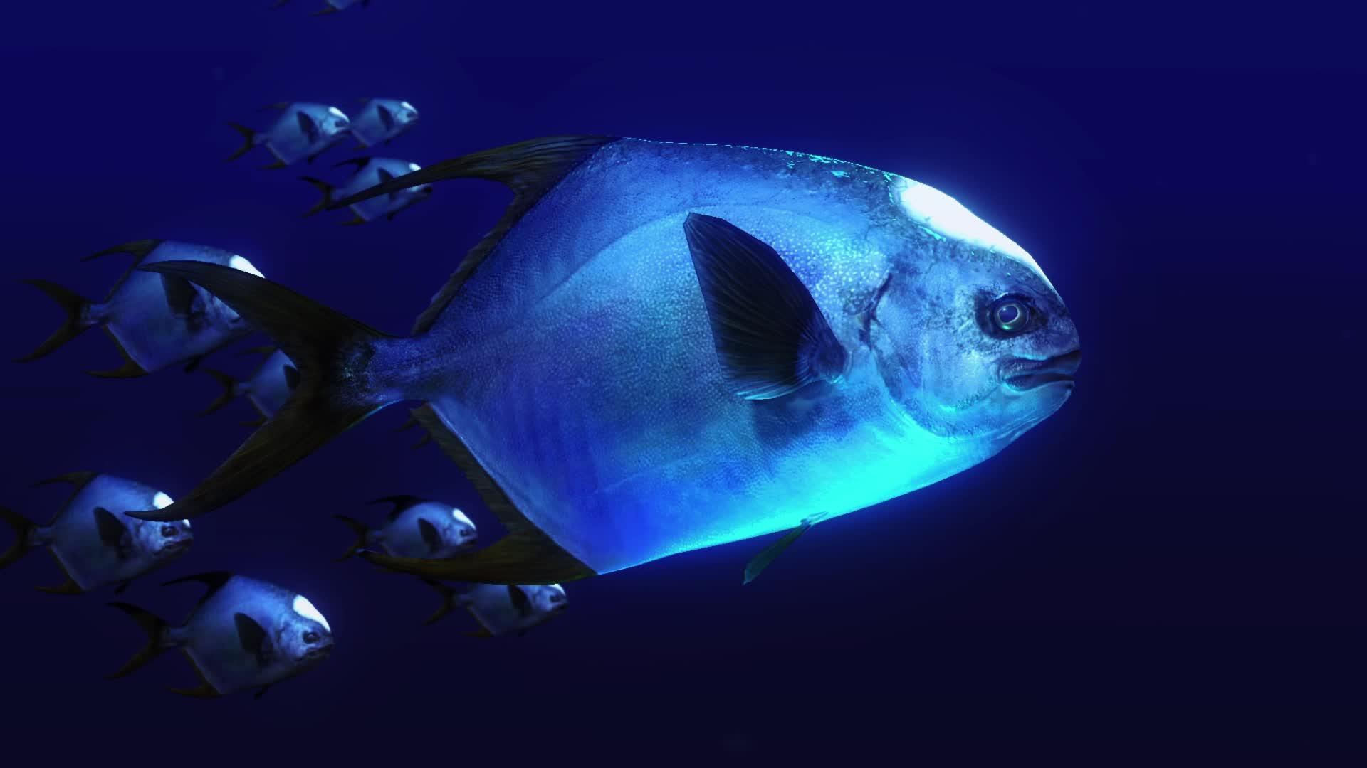 animalgifs, gamedevscreens, indiegames, Debris Flashlight Fish  GIFs