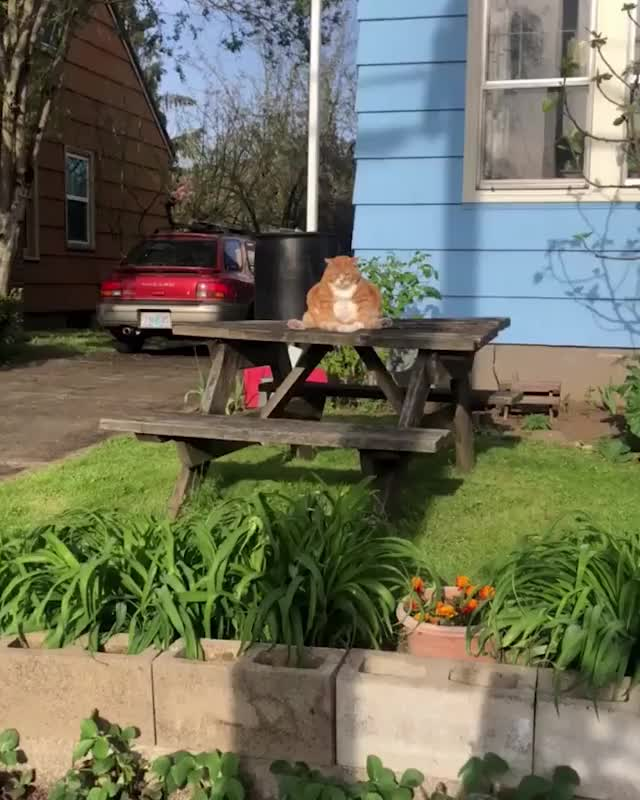 Watch and share Funnycat GIFs and Cats GIFs by Koleandra on Gfycat