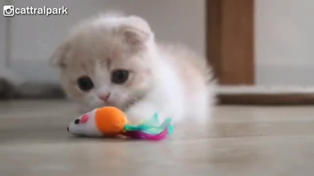 Watch and share Kittens GIFs and Fluffy GIFs on Gfycat