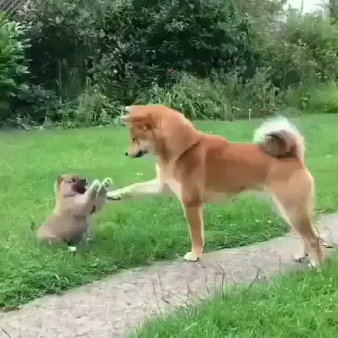 Watch and share Puppy GIFs and Dog GIFs by Master1718 on Gfycat